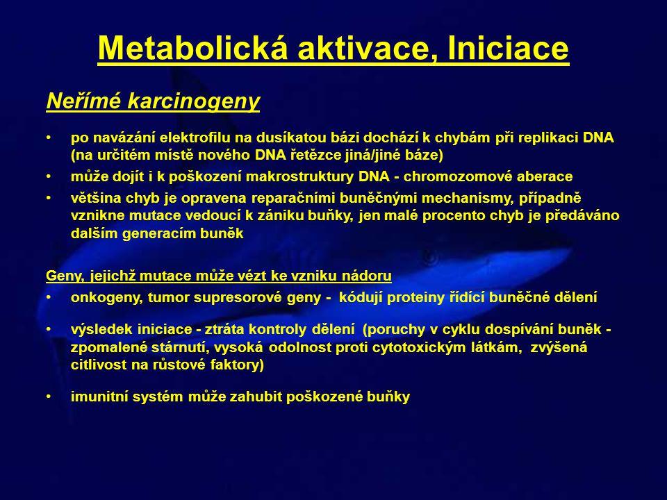 Metabolická aktivace, Iniciace Neřímé karcinogeny po navázání elektrofilu na dusíkatou bázi dochází k chybám při replikaci DNA (na určitém místě novéh