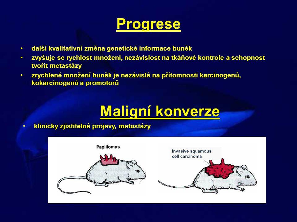 Progrese další kvalitativní změna genetické informace buněk zvyšuje se rychlost množení, nezávislost na tkáňové kontrole a schopnost tvořit metastázy