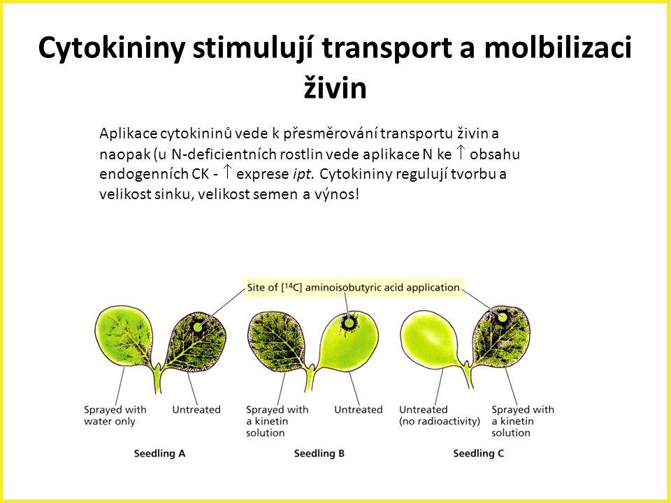 Cytokininy stimulují transport a molbilizaci živin Aplikace cytokininů vede k přesměrování transportu živin a naopak (u N-deficientních rostlin vede a