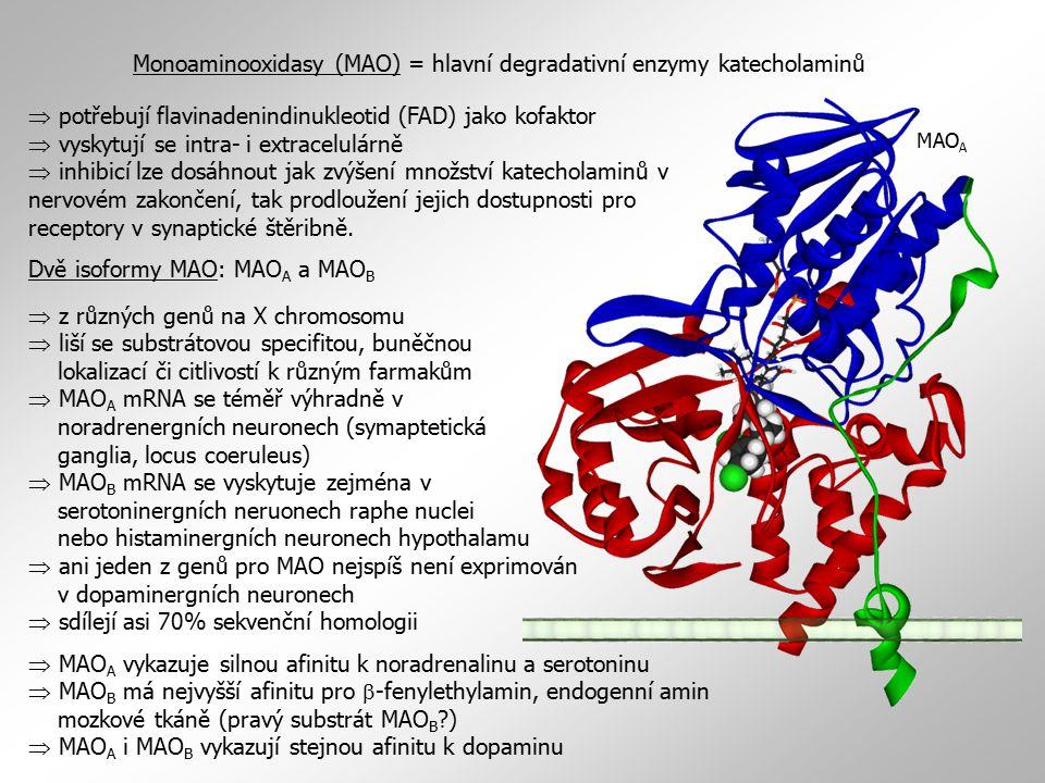 Monoaminooxidasy (MAO) = hlavní degradativní enzymy katecholaminů  potřebují flavinadenindinukleotid (FAD) jako kofaktor  vyskytují se intra- i extracelulárně  inhibicí lze dosáhnout jak zvýšení množství katecholaminů v nervovém zakončení, tak prodloužení jejich dostupnosti pro receptory v synaptické štěribně.
