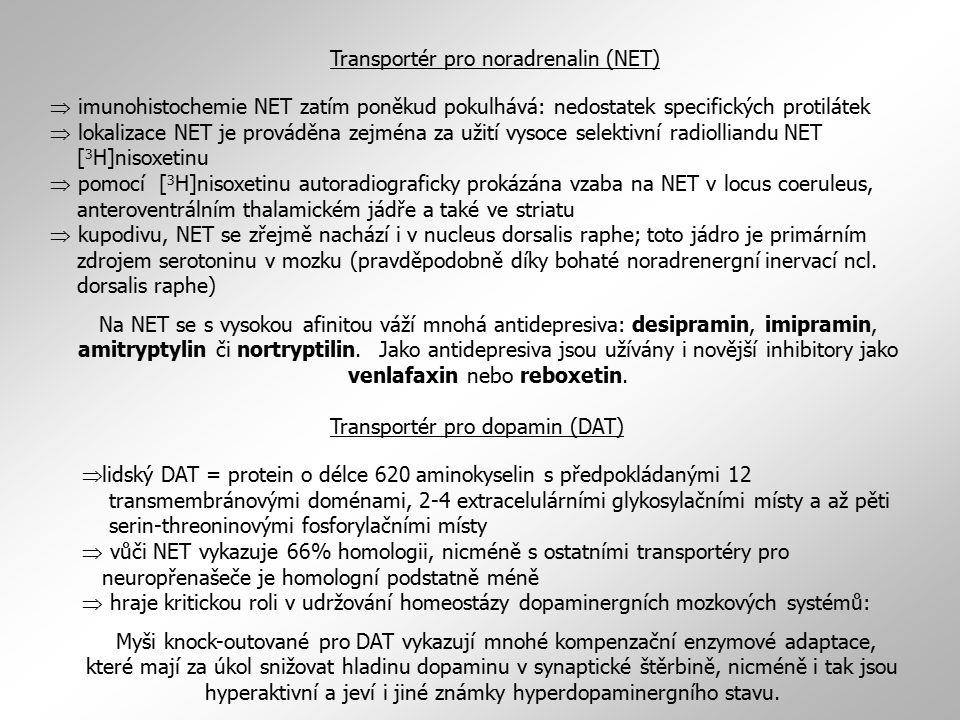  imunohistochemie NET zatím poněkud pokulhává: nedostatek specifických protilátek  lokalizace NET je prováděna zejména za užití vysoce selektivní radiolliandu NET [ 3 H]nisoxetinu  pomocí [ 3 H]nisoxetinu autoradiograficky prokázána vzaba na NET v locus coeruleus, anteroventrálním thalamickém jádře a také ve striatu  kupodivu, NET se zřejmě nachází i v nucleus dorsalis raphe; toto jádro je primárním zdrojem serotoninu v mozku (pravděpodobně díky bohaté noradrenergní inervací ncl.