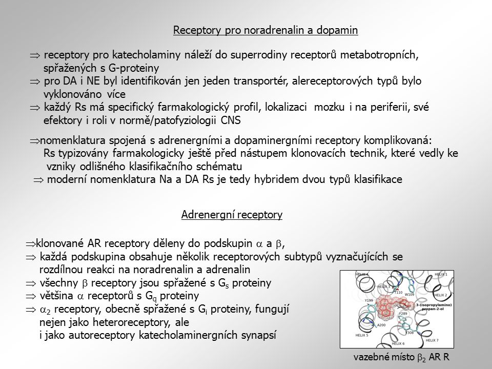  receptory pro katecholaminy náleží do superrodiny receptorů metabotropních, spřažených s G-proteiny  pro DA i NE byl identifikován jen jeden transportér, alereceptorových typů bylo vyklonováno více  každý Rs má specifický farmakologický profil, lokalizaci mozku i na periferii, své efektory i roli v normě/patofyziologii CNS  nomenklatura spojená s adrenergními a dopaminergními receptory komplikovaná: Rs typizovány farmakologicky ještě před nástupem klonovacích technik, které vedly ke vzniky odlišného klasifikačního schématu  moderní nomenklatura Na a DA Rs je tedy hybridem dvou typů klasifikace Receptory pro noradrenalin a dopamin Adrenergní receptory  klonované AR receptory děleny do podskupin  a ,  každá podskupina obsahuje několik receptorových subtypů vyznačujících se rozdílnou reakci na noradrenalin a adrenalin  všechny  receptory jsou spřažené s G s proteiny  většina  receptorů s G q proteiny   2 receptory, obecně spřažené s G i proteiny, fungují nejen jako heteroreceptory, ale i jako autoreceptory katecholaminergních synapsí vazebné místo  2 AR R