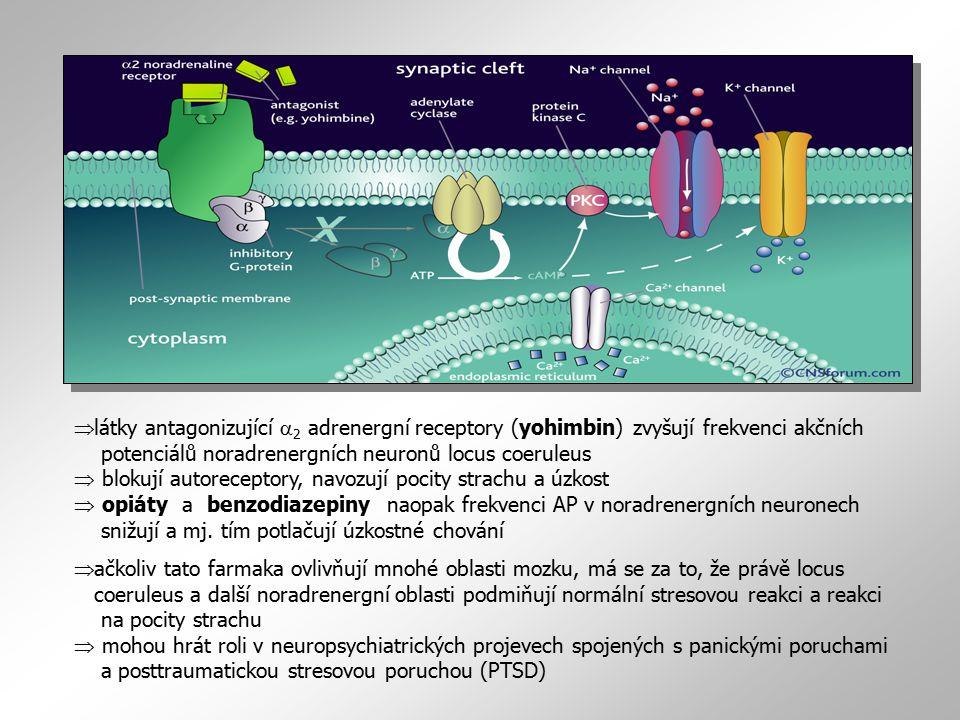  látky antagonizující  2 adrenergní receptory (yohimbin) zvyšují frekvenci akčních potenciálů noradrenergních neuronů locus coeruleus  blokují autoreceptory, navozují pocity strachu a úzkost  opiáty a benzodiazepiny naopak frekvenci AP v noradrenergních neuronech snižují a mj.
