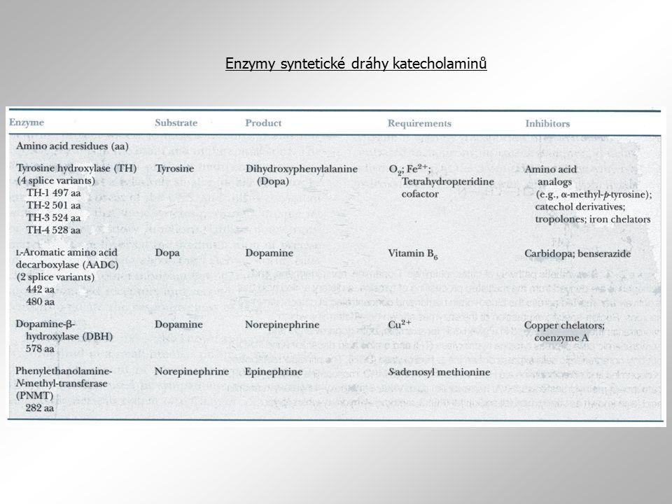 Tyrosinhydroxylasa  proteinem rodiny hydroxylas aminokyselin  z lidského materiálu sou známy 4 sestřihové varianty TH  jejich funkční význam zatím neobjasněn  kromě regulace sestřihu dochází u TH také k regulaci stability mRNA enzymu nebo k regulaci rychlosti jeho translace  další hydrolasy aminokyselin: tryptofanhydroxylasa, rate-limiting enzym zapojený do syntézy serotoninu fenylalaninhydroxylasa, enzym konvertující alanin na tyrosin (mutace tohoto enzymu výrazně redukují jeho aktivitu vedou u postižených jedinců k fenylalanemii (fenylketonurii) Neléčená PKE vede již neonatálně k těžké mentální retardaci.