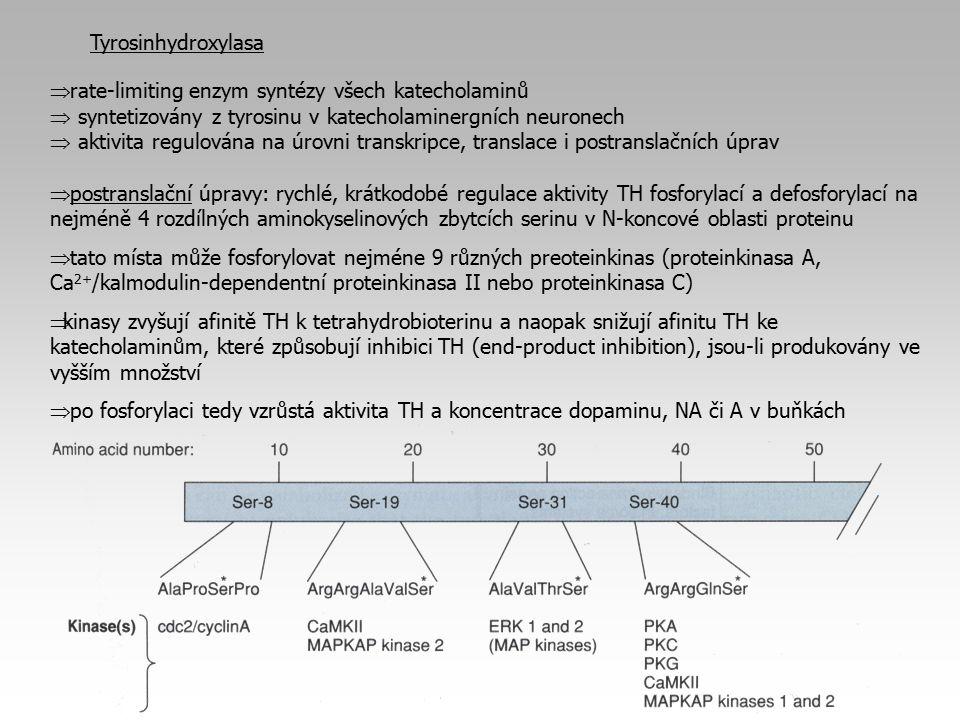 Phe Tyr DOPA DA NA MAO Reserpin, Tetrabenazin AMPT Carbidopa FLA-63 Amfetamin NA Tricyklická antidepresiva, amfetamin, imipramin, kokain 22 Clonidin DOPEG Iproniazid, Pargylin Fenoxybenzamin, phentolamin, propranolol, ergotamin NormetanephrinMHPG Tropolon, entacapon, tolacapon Farmakologie noradrenergní synapse...