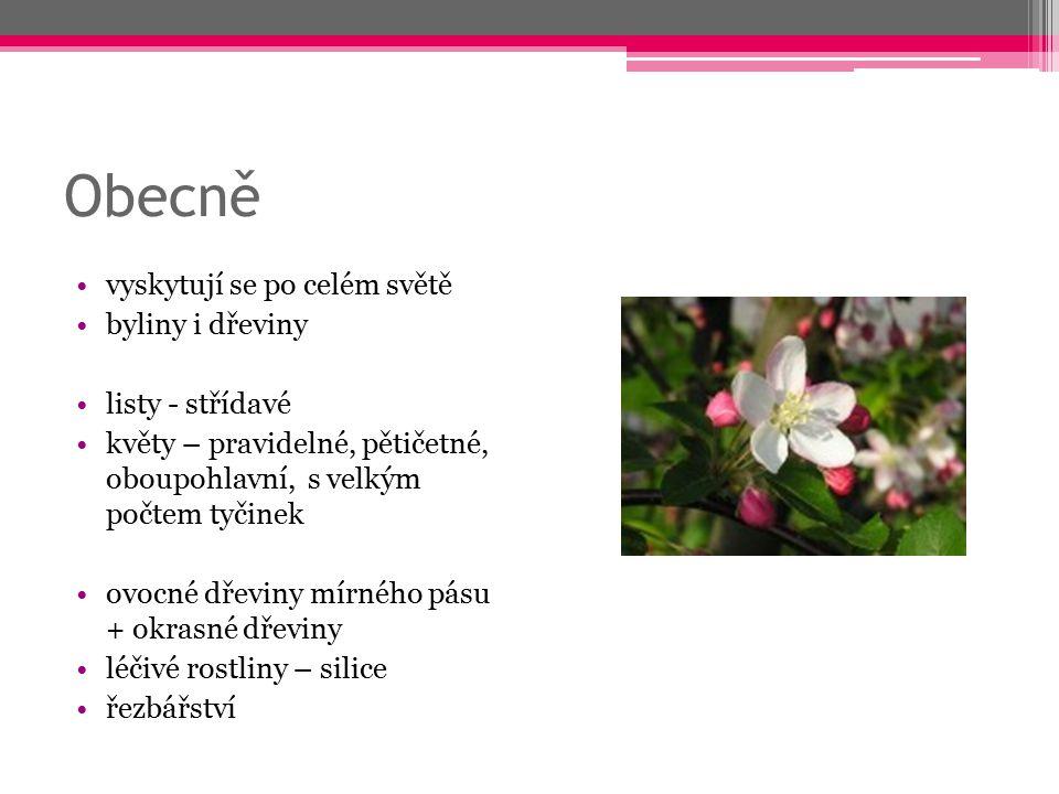 Obecně vyskytují se po celém světě byliny i dřeviny listy - střídavé květy – pravidelné, pětičetné, oboupohlavní, s velkým počtem tyčinek ovocné dřevi