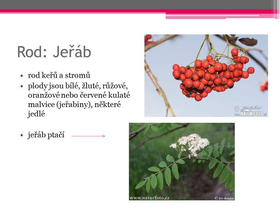 Rod: Jeřáb rod keřů a stromů plody jsou bílé, žluté, růžové, oranžové nebo červené kulaté malvice (jeřabiny), některé jedlé jeřáb ptačí