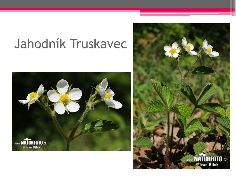 Rod: Růže keře, popínavé nebo plazivé rostliny okrasné rostliny plod- šípky – léčivé účinky ostny listy – střídavé, zubatý okraj, lichozpeřené aromatické silice růžový olej - parfémy