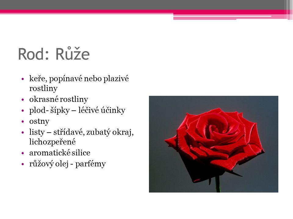 Rod: Růže keře, popínavé nebo plazivé rostliny okrasné rostliny plod- šípky – léčivé účinky ostny listy – střídavé, zubatý okraj, lichozpeřené aromati
