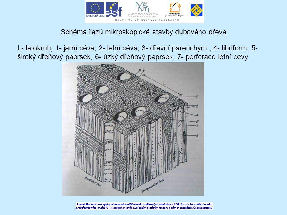 Schéma řezů mikroskopické stavby dubového dřeva L- letokruh, 1- jarní céva, 2- letní céva, 3- dřevní parenchym, 4- libriform, 5- široký dřeňový paprse