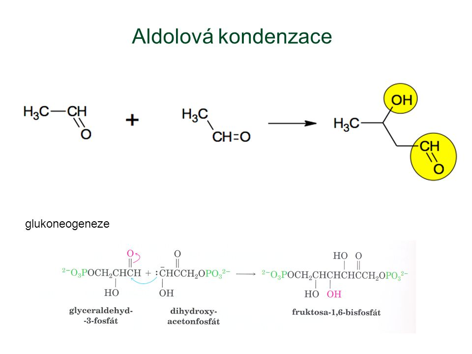 glukoneogeneze Aldolová kondenzace