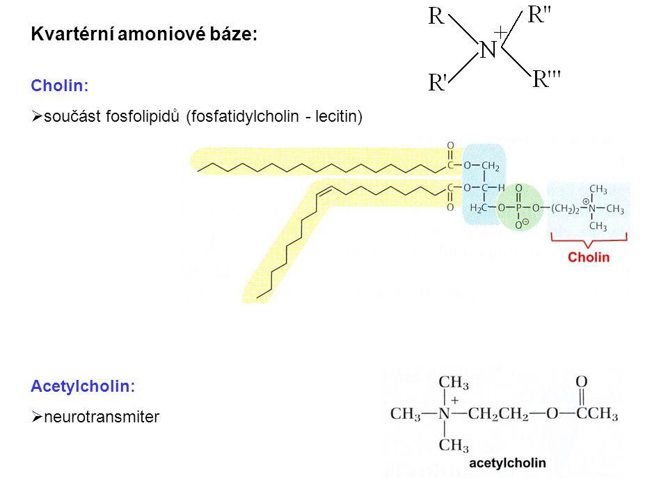 Kvartérní amoniové báze: Cholin:  součást fosfolipidů (fosfatidylcholin - lecitin) Acetylcholin:  neurotransmiter