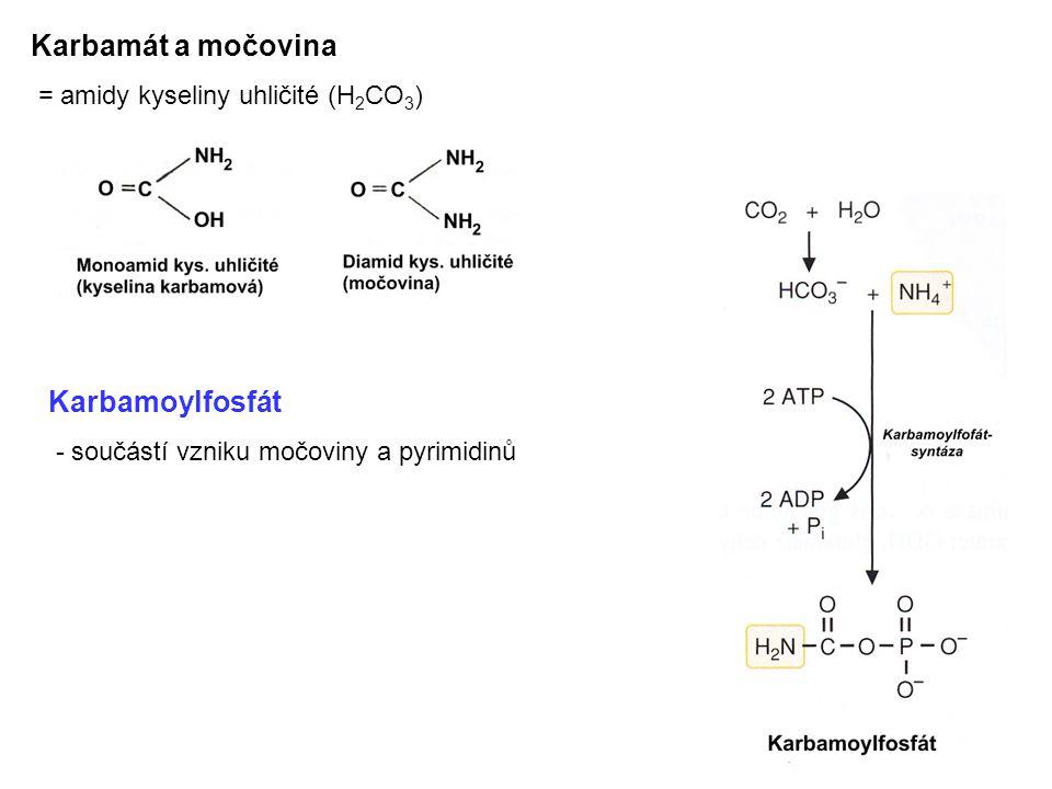 Karbamát a močovina = amidy kyseliny uhličité (H 2 CO 3 ) Karbamoylfosfát - součástí vzniku močoviny a pyrimidinů