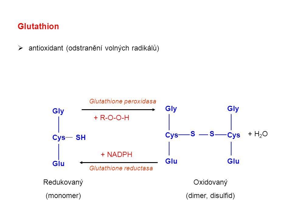 Glutathion  antioxidant (odstranění volných radikálů) Gly Cys Glu Gly Cys Glu Gly Cys SH Glu S Oxidovaný (dimer, disulfid) Redukovaný (monomer) + H 2 O Glutathione peroxidasa Glutathione reductasa + R-O-O-H + NADPH