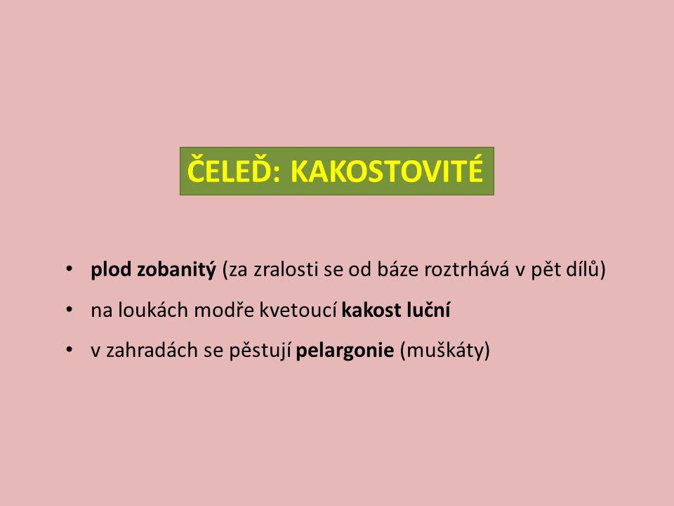 kakost smrdutý – Geranium robertianum V: do 40 cm S: chlupatý, načervenalý L: dlanitě 3-5dílné, křehké, po rozemnutí páchnoucí K: růžové, kvete V-IX E: nitrofilní druh (luhy, sutě), středně vlhké půdy, stinný Z: