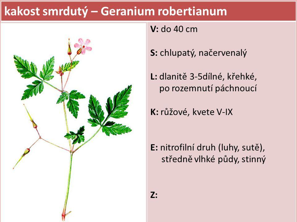 kakost hnědočervený – Geranium phaeum V: do 60 cm S: chlupatý L: dlanitě 3-7dílné, chlupaté, dolní řapíkaté, horní přisedlé K: hnědočervené, kvete V-VII, květenství dvoukvěté, korunní lístky mají na vrcholu špičku E: minerálně středně bohaté a vlhké půdy (podél potoků, olšiny), polostinný, hojnější v horách karpatské oblasti Z: v zahradách jako okrasná rostlina