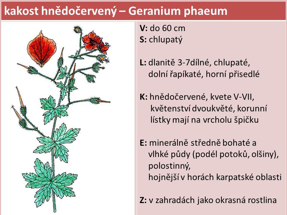 kakost krvavý – Geranium sanguineum V: do 40 cm S: chlupatý, poléhavý až vystoupavý L: dlanitě 5-7sečně, úkrojky kopinaté na podzim červeně zbarvené K: karmínově růžové, jednotlivé, dlouze stopkaté, kvete V-VII E: teplomilný, lesostepní druh, vápnité podloží, mělké a suché půdy, světlomilný ( Č.