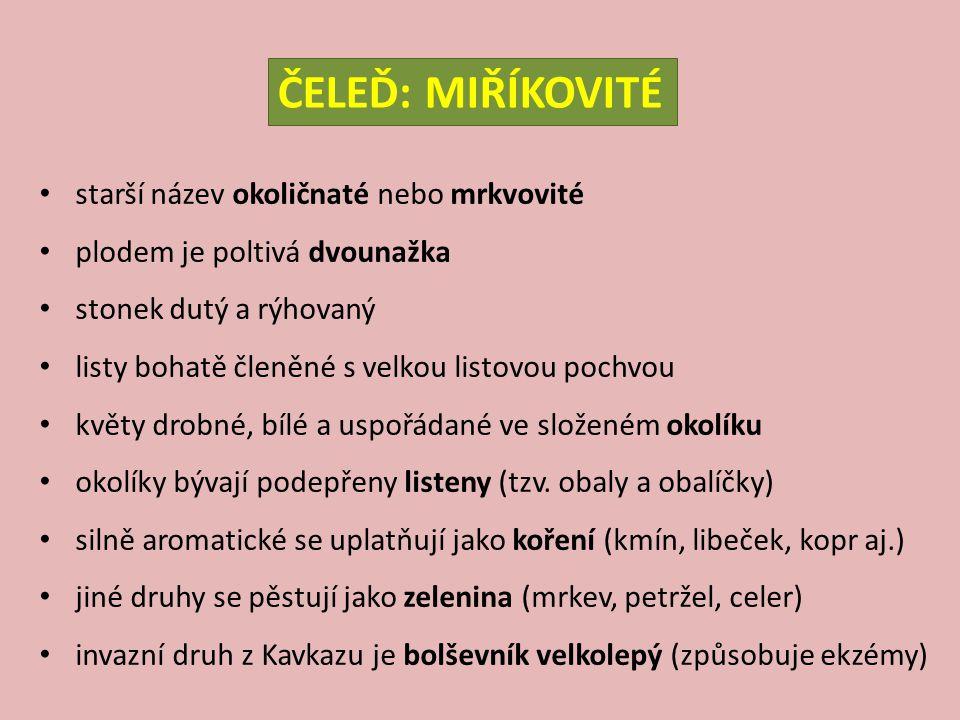 žindava evropská – Sanicula europaea V: do 40 cm S: L: dlanitě pěti-sečné s trojklanými úkrojky, přízemní dlouze řapíkaté, stonkové přisedlé a menší K: bílé, drobné, v jednoduchém okolíku, kvete V-VII E: minerálně středně bohaté až bohaté půdy, středně vlhké, bučinový druh (3.–7.