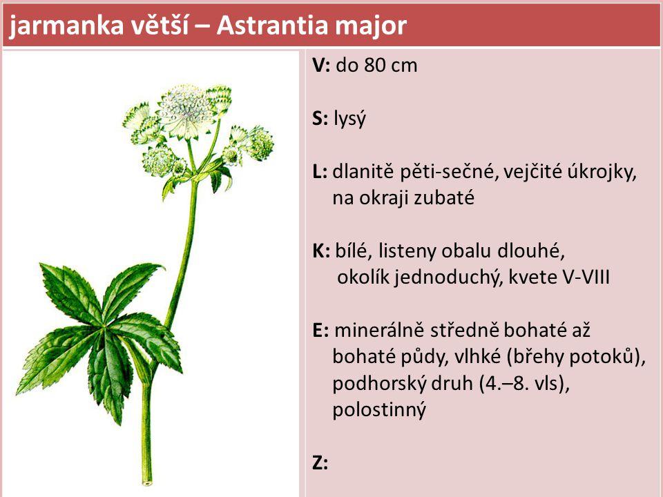 jarmanka větší – Astrantia major V: do 80 cm S: lysý L: dlanitě pěti-sečné, vejčité úkrojky, na okraji zubaté K: bílé, listeny obalu dlouhé, okolík je