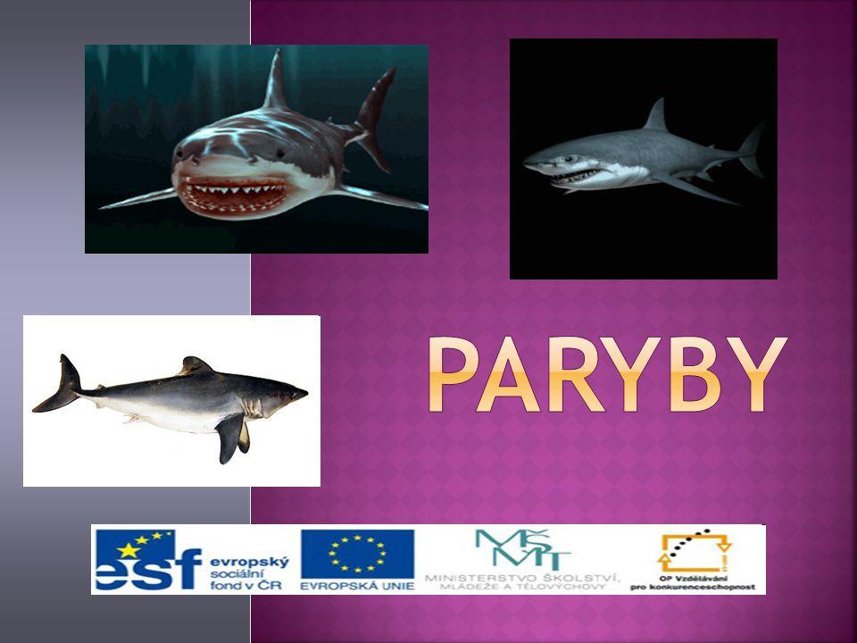 Kmen: Strunatci Podkmen: Obratlovci Třída: Paryby Podtřída: Žraloci Rejnoci Chiméry