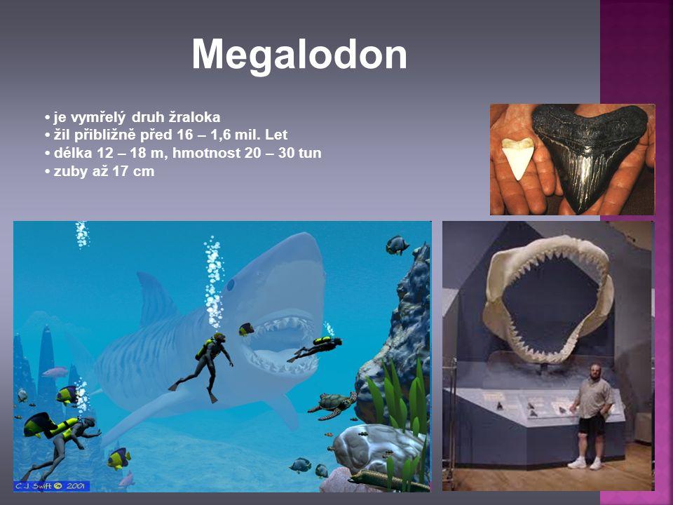 je vymřelý druh žraloka žil přibližně před 16 – 1,6 mil. Let délka 12 – 18 m, hmotnost 20 – 30 tun zuby až 17 cm