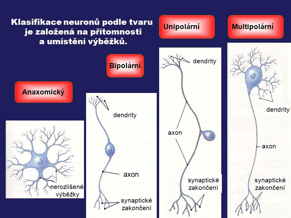dendrity axon synaptické zakončení dendrity axon synaptické zakončení dendrity axon synaptické zakončení nerozlišené výběžky Bipolární Unipolární Mult