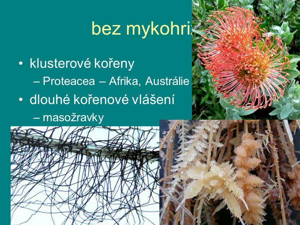 bez mykohrizy klusterové kořeny –Proteacea – Afrika, Austrálie dlouhé kořenové vlášení –masožravky