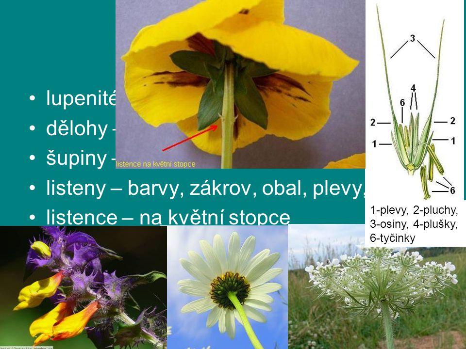 modifikace lupenité – asimilace dělohy – zásoba šupiny – ochrana listeny – barvy, zákrov, obal, plevy, pluchy listence – na květní stopce 1-plevy, 2-p