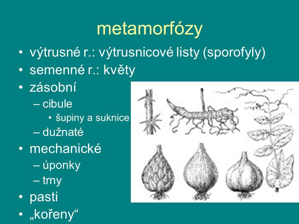 """metamorfózy výtrusné r.: výtrusnicové listy (sporofyly) semenné r.: květy zásobní –cibule šupiny a suknice –dužnaté mechanické –úponky –trny pasti """"ko"""