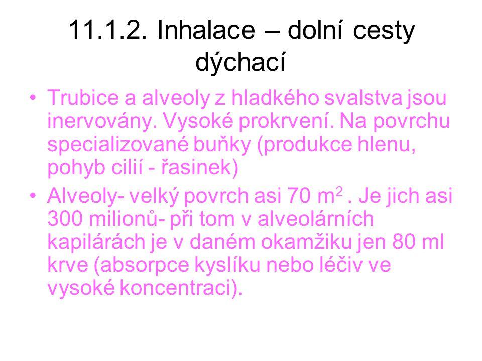 11.1.2.Inhalace – dolní cesty dýchací Trubice a alveoly z hladkého svalstva jsou inervovány.