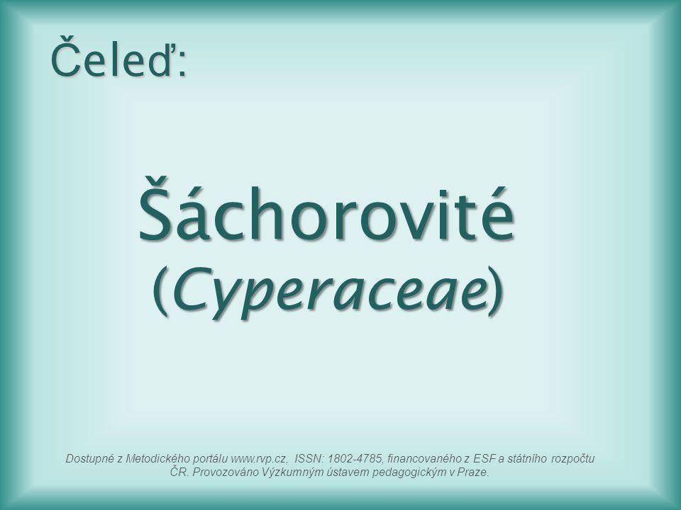 Šáchorovité (Cyperaceae) Č ele ď : Dostupné z Metodického portálu www.rvp.cz, ISSN: 1802-4785, financovaného z ESF a státního rozpočtu ČR. Provozováno