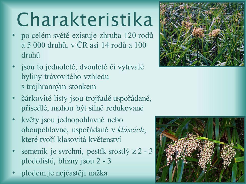 po celém světě existuje zhruba 120 rodů a 5 000 druhů, v ČR asi 14 rodů a 100 druhů jsou to jednoleté, dvouleté či vytrvalé byliny trávovitého vzhledu