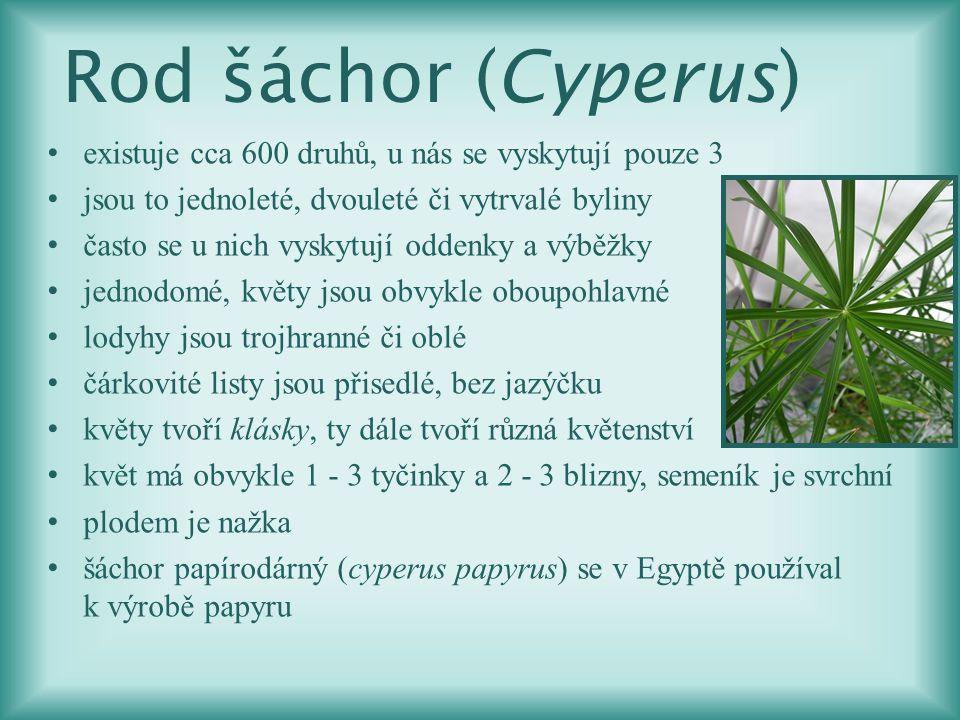 Šáchor hn ě dý (Cyperus fuscus) jednoletá bylina bez oddenku trojhranné lodyhy mohou být až 35 cm dlouhé roste především na vlhkých písčitých místech plodem je nažka v ČR patří mezi ohrožené druhy kvete od července do října