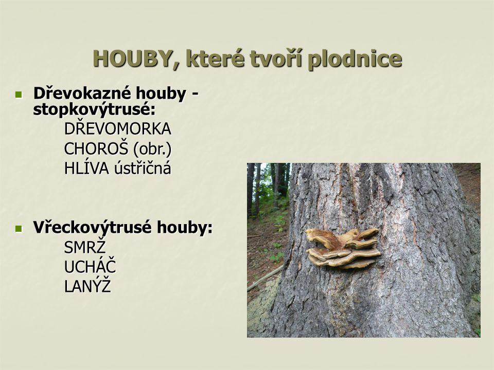 HOUBY, které tvoří plodnice Dřevokazné houby - stopkovýtrusé: Dřevokazné houby - stopkovýtrusé:DŘEVOMORKA CHOROŠ (obr.) CHOROŠ (obr.) HLÍVA ústřičná V