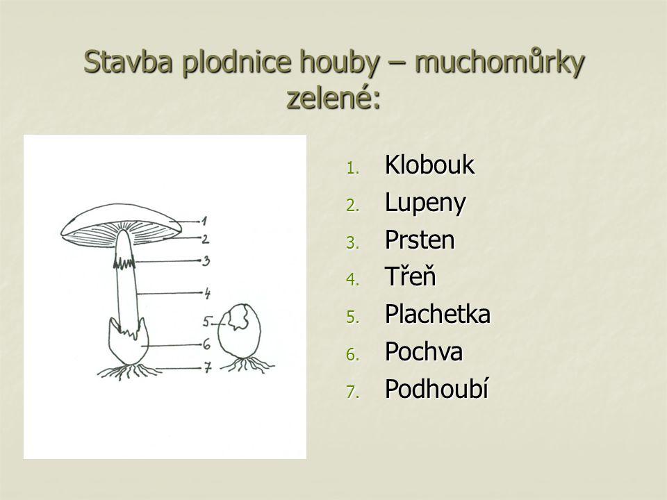 Stavba plodnice houby – muchomůrky zelené: 1. Klobouk 2. Lupeny 3. Prsten 4. Třeň 5. Plachetka 6. Pochva 7. Podhoubí
