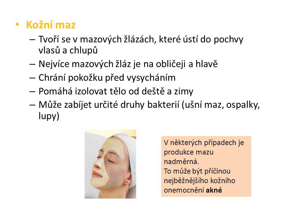 Kožní maz – Tvoří se v mazových žlázách, které ústí do pochvy vlasů a chlupů – Nejvíce mazových žláz je na obličeji a hlavě – Chrání pokožku před vysy