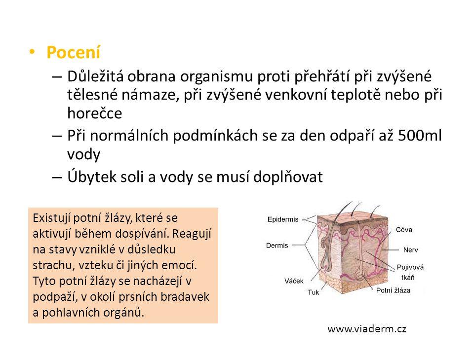 Pigmentace – V pokožce jsou pigmentové buňky – ty obsahují kožní barvivo pigment – Čím je pigmentu více, tím je pokožka tmavší – Pigment má ochrannou funkci – zachycuje ultrafialové záření Podle barvy pleti a dalších dědičných vlastností rozlišujeme tři hlavní lidské rasy: 1.Bílá (europoidní) – v oblasti mírného až chladného pásma 2.Černá (negroidní) – v tropických oblastech otevřené krajiny 3.Žlutá (mongoloidní) – v oblastech tropických pralesů s vysokými srážkami a bujnou vegetací Všechny rasy jsou rovnocenné www.sci.muni.cz