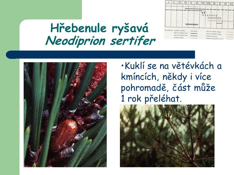 Kuklí se na větévkách a kmíncích, někdy i více pohromadě, část může 1 rok přeléhat. Hřebenule ryšavá Neodiprion sertifer
