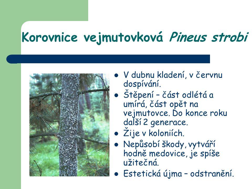 Korovnice vejmutovková Pineus strobi V dubnu kladení, v červnu dospívání. Štěpení – část odlétá a umírá, část opět na vejmutovce. Do konce roku další