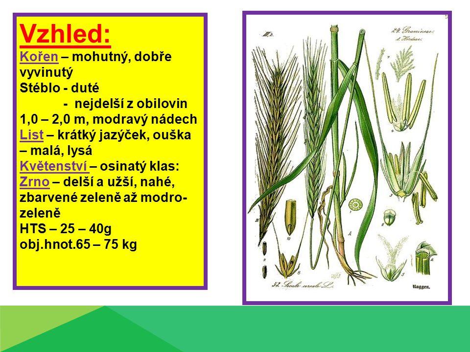 Vzhled: Kořen – mohutný, dobře vyvinutý Stéblo - duté - nejdelší z obilovin 1,0 – 2,0 m, modravý nádech List – krátký jazýček, ouška – malá, lysá Květ