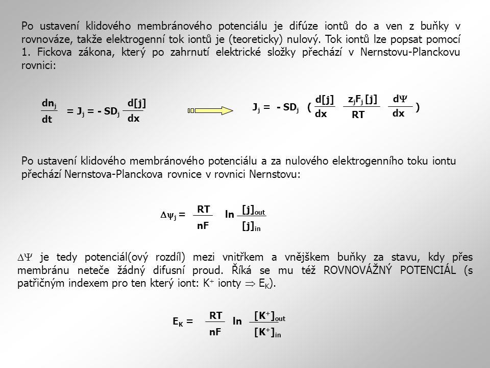 Po ustavení klidového membránového potenciálu je difúze iontů do a ven z buňky v rovnováze, takže elektrogenní tok iontů je (teoreticky) nulový. Tok i