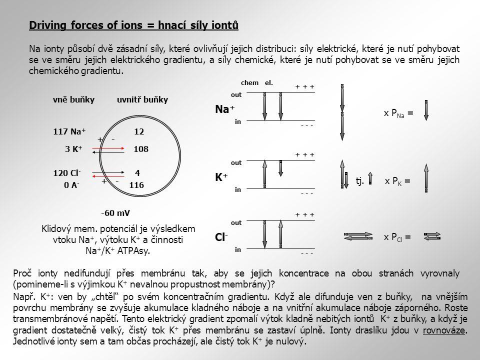Driving forces of ions = hnací síly iontů Na ionty působí dvě zásadní síly, které ovlivňují jejich distribuci: síly elektrické, které je nutí pohybova