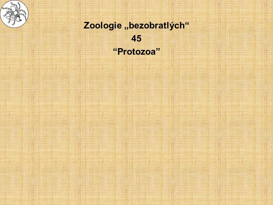 """Zoologie """"bezobratlých 45 Protozoa"""
