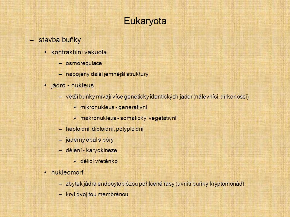 Eukaryota –stavba buňky kontraktilní vakuola –osmoregulace –napojeny další jemnější struktury jádro - nukleus –větší buňky mívají více geneticky ident