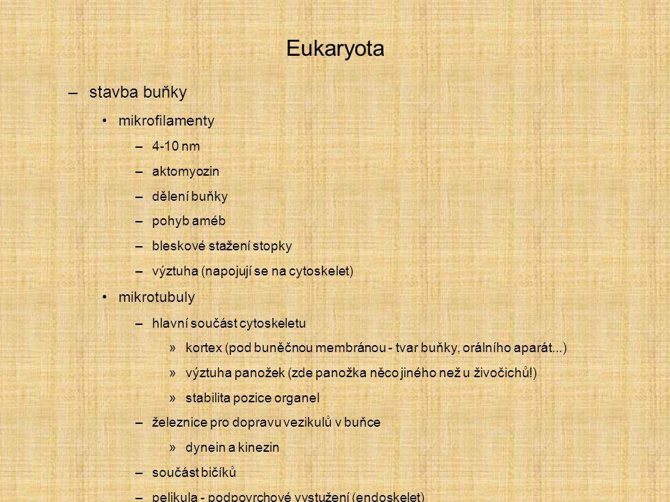 Eukaryota –stavba buňky mikrofilamenty –4-10 nm –aktomyozin –dělení buňky –pohyb améb –bleskové stažení stopky –výztuha (napojují se na cytoskelet) mi