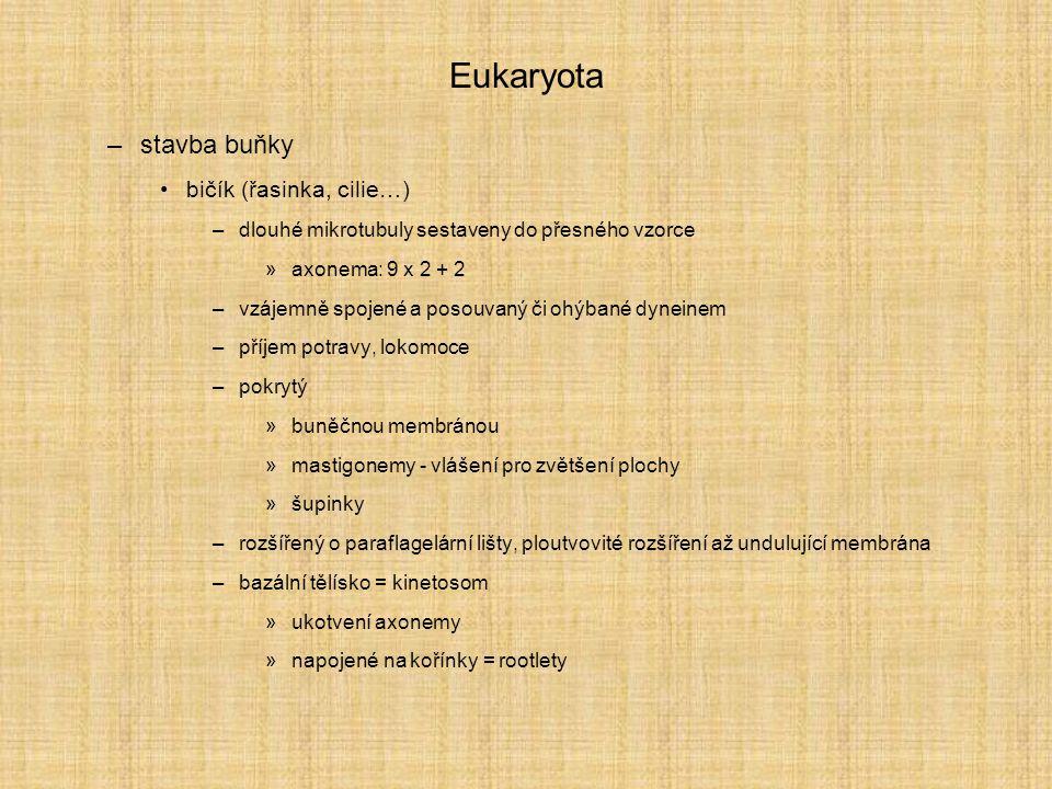 Eukaryota –stavba buňky bičík (řasinka, cilie…) –dlouhé mikrotubuly sestaveny do přesného vzorce »axonema: 9 x 2 + 2 –vzájemně spojené a posouvaný či