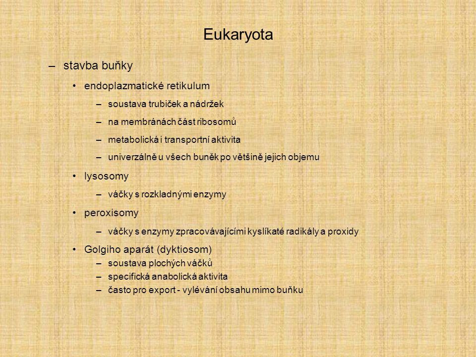 Eukaryota –stavba buňky endoplazmatické retikulum –soustava trubiček a nádržek –na membránách část ribosomů –metabolická i transportní aktivita –unive