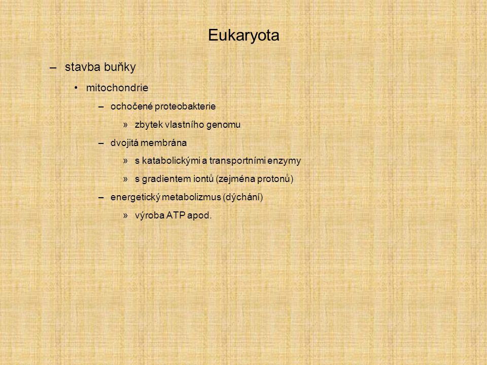 Eukaryota –stavba buňky mitochondrie –ochočené proteobakterie »zbytek vlastního genomu –dvojitá membrána »s katabolickými a transportními enzymy »s gradientem iontů (zejména protonů) –energetický metabolizmus (dýchání) »výroba ATP apod.