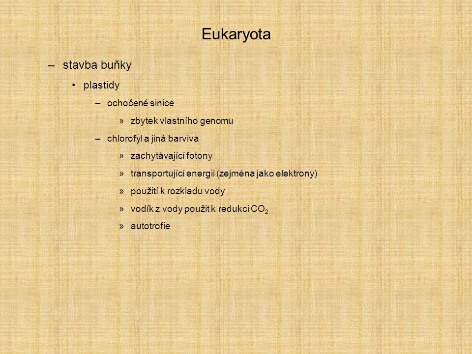 Eukaryota –stavba buňky plastidy –ochočené sinice »zbytek vlastního genomu –chlorofyl a jiná barviva »zachytávající fotony »transportující energii (ze