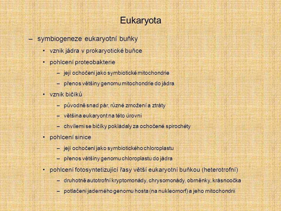 Eukaryota –symbiogeneze eukaryotní buňky vznik jádra v prokaryotické buňce pohlcení proteobakterie –její ochočení jako symbiotické mitochondrie –přenos většiny genomu mitochondrie do jádra vznik bičíků –původně snad pár, různé zmožení a ztráty –většina eukaryont na této úrovni –chvílemi se bičíky pokládaly za ochočené spirochéty pohlcení sinice –její ochočení jako symbiotického chloroplastu –přenos většiny genomu chloroplastu do jádra pohlcení fotosyntetizující řasy větší eukaryotní buňkou (heterotrofní) –druhotně autotrofní kryptomonády, chrysomonády, obrněnky, krásnoočka –potlačení jaderného genomu hosta (na nukleomorf) a jeho mitochondrií